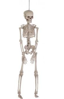 Esqueleto Colgante Articulado, 40 cm.